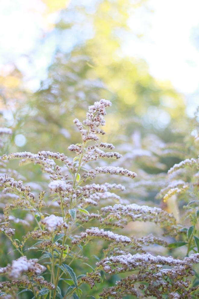 kasvit pihalla