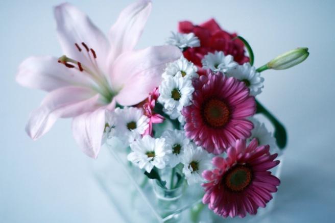 pinkki lähikuva kukista