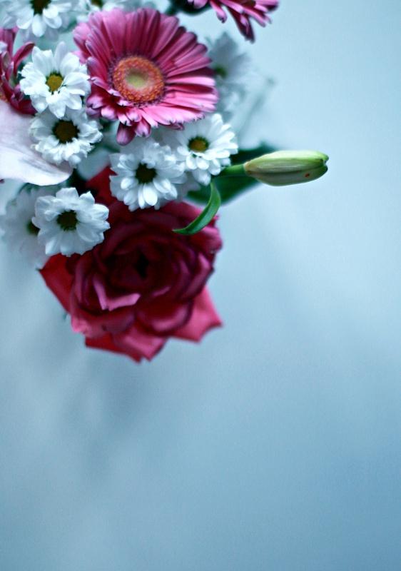 kaunis kuva kukista, canon 50 mm / f 1,4