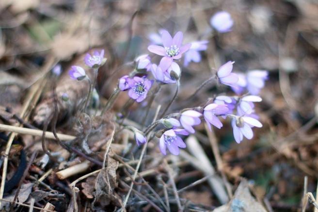 luonnossa, kevättä