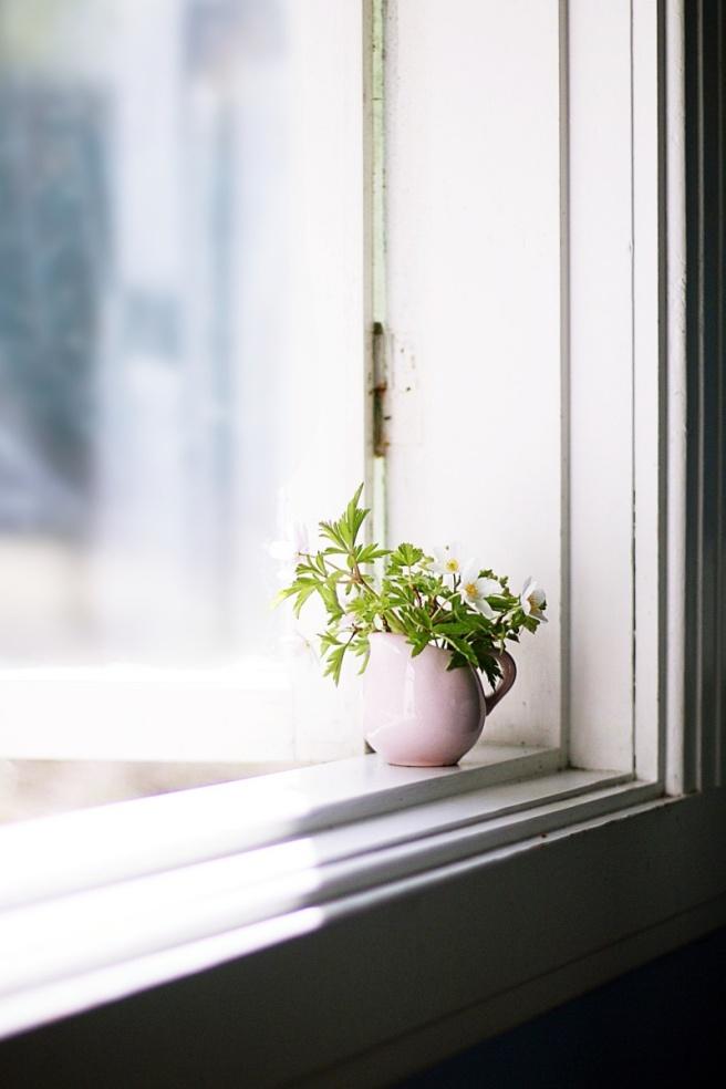 kukka ikkunalla