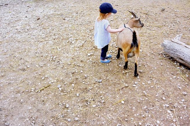 kaksivuotias eläintarhaan