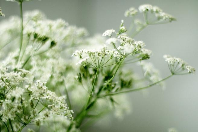 kukkia luonnosta