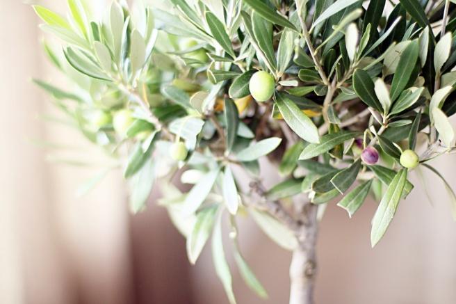 oliivipuu sisustuksessa