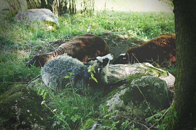 lampaita turussa