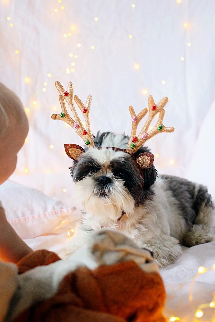 koira joulukorttikuva